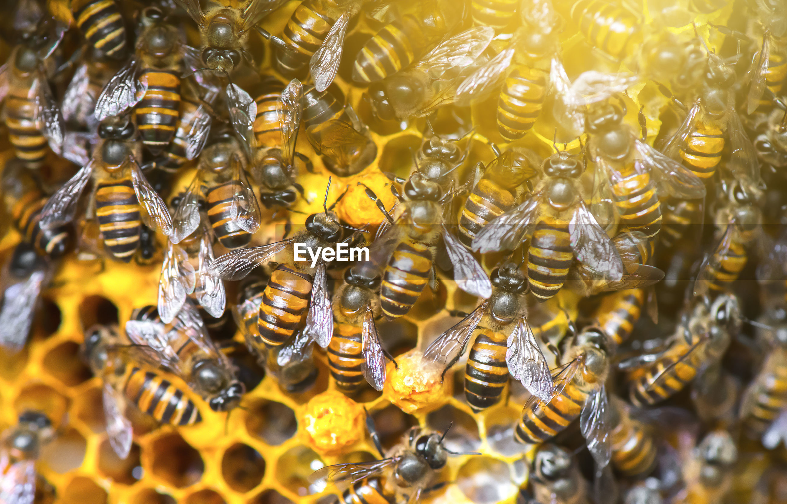 Close-up of bees in honeycomb