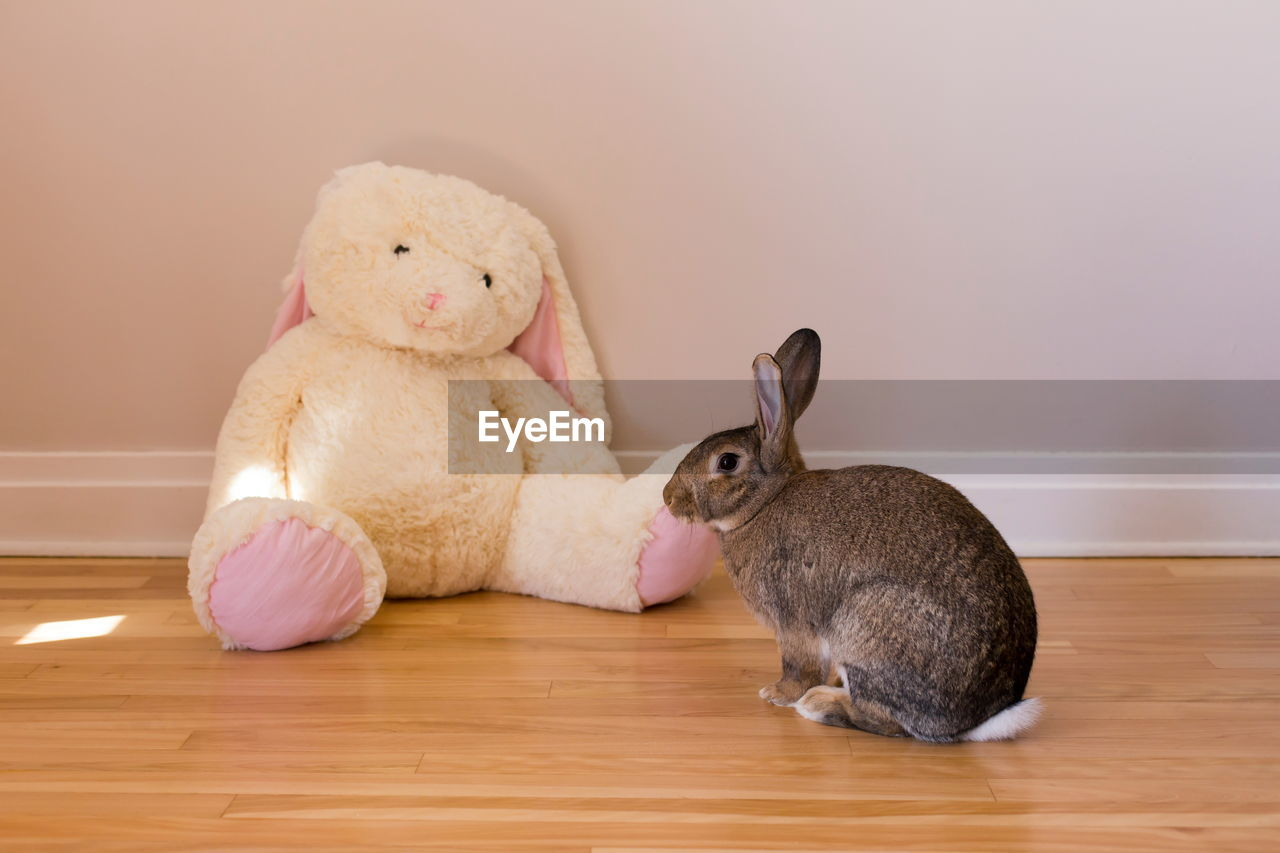 stuffed toy, mammal, indoors, toy, animal, representation, animal representation, teddy bear, animal themes, domestic animals, no people, home interior, flooring, rabbit - animal, wood, cute, pets, hardwood floor, domestic, softness