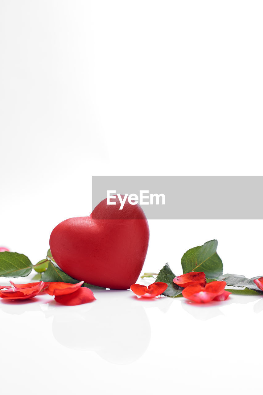 white background, studio shot, red, copy space, indoors, freshness, still life, leaf, plant part, close-up, no people, food and drink, food, cut out, plant, flower, nature, rose - flower, rose, beauty in nature