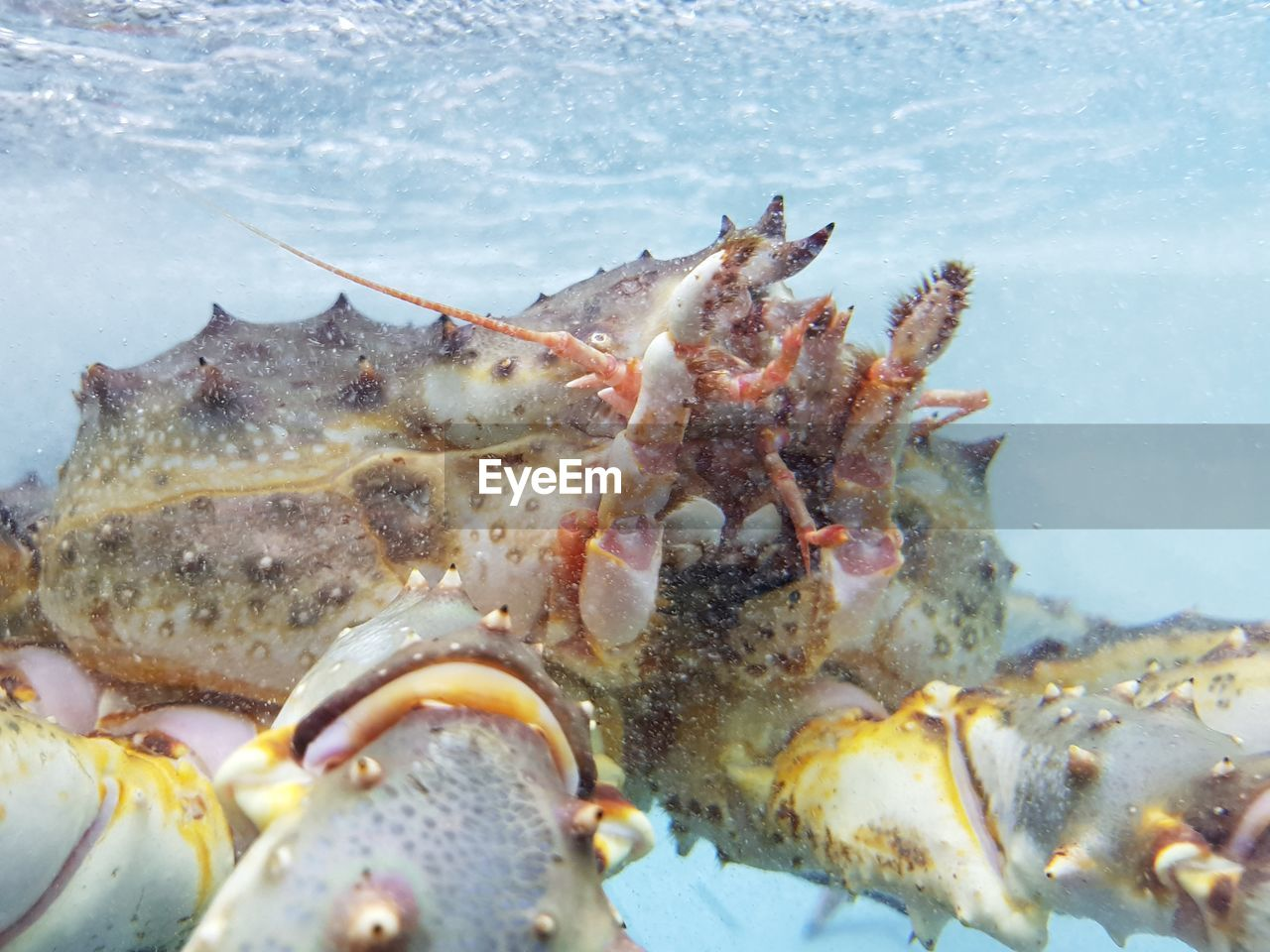 sea, animals in the wild, underwater, water, animal, animal themes, animal wildlife, sea life, marine, close-up, undersea, crustacean, no people, crab, one animal, nature, day, outdoors