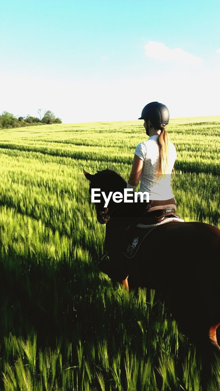 field, domestic animals, grass, one animal, pets, real people, mammal, casual clothing, nature, dog, growth, rear view, agriculture, one person, day, full length, landscape, outdoors, rural scene, standing, sitting, childhood, sky, clear sky, beauty in nature, scenics, women