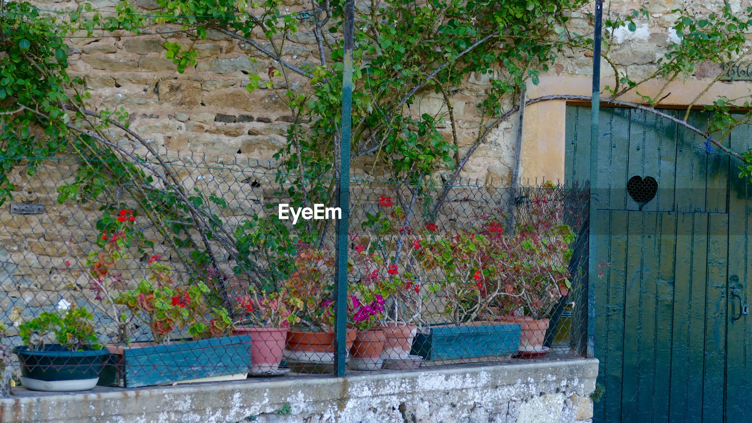 Potted plants outside house