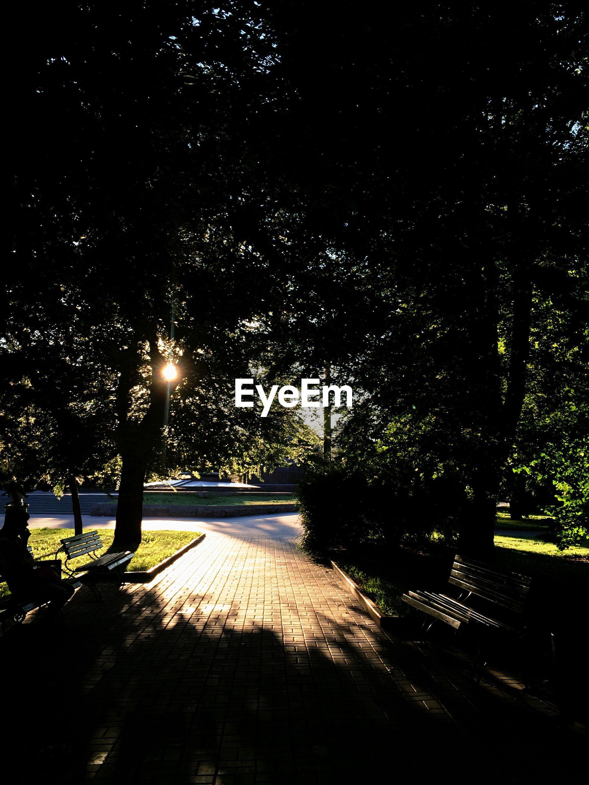 ILLUMINATED TREES AGAINST SKY WITH SUNLIGHT