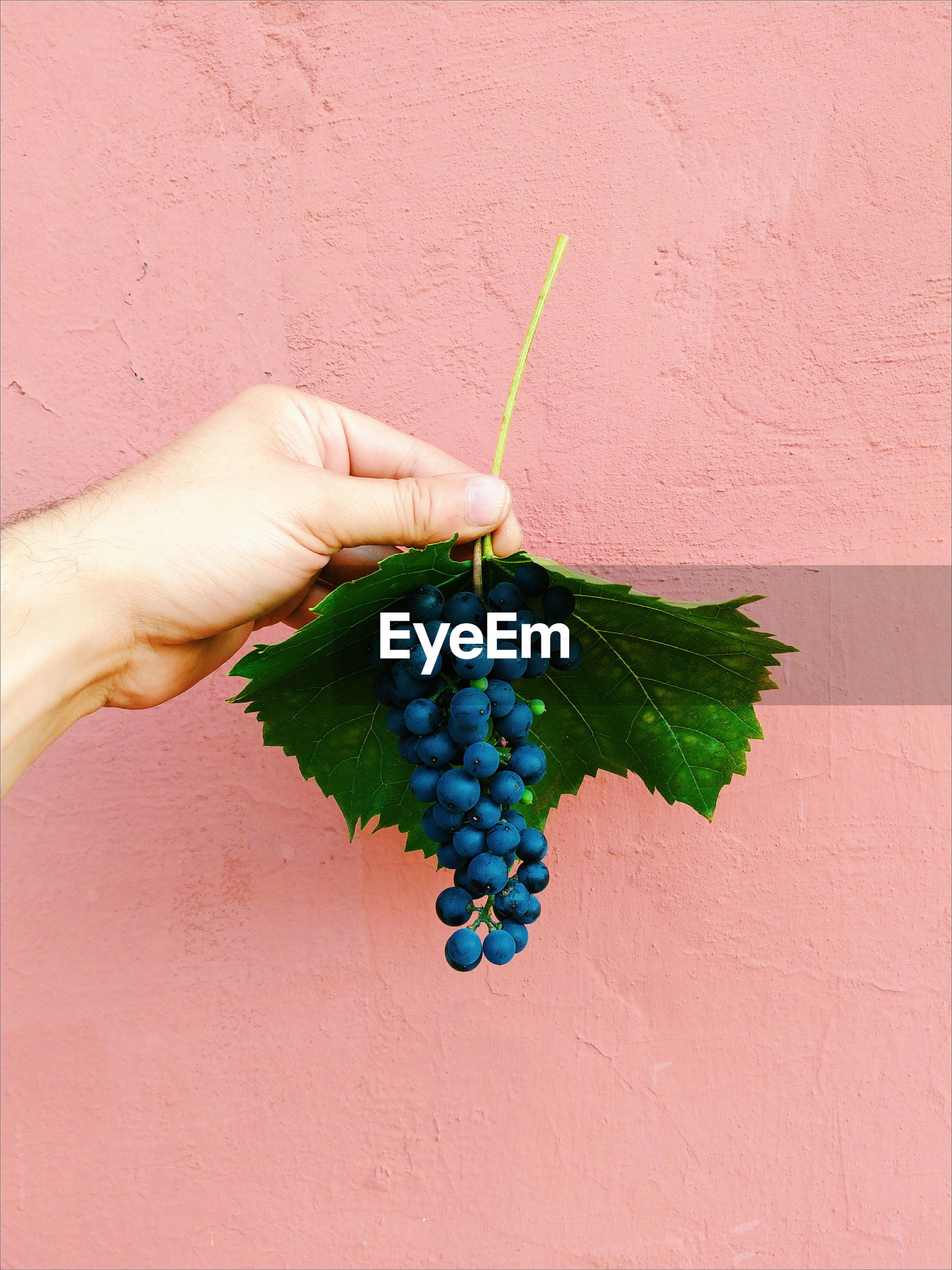 Hand holding grapes against wall