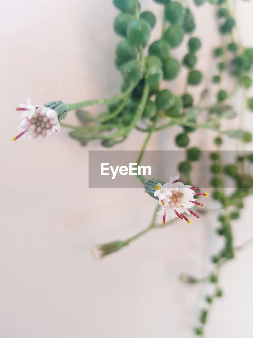 flower, fragility, growth, plant, nature, no people, beauty in nature, close-up, petal, freshness, day, flower head, tree, branch, outdoors