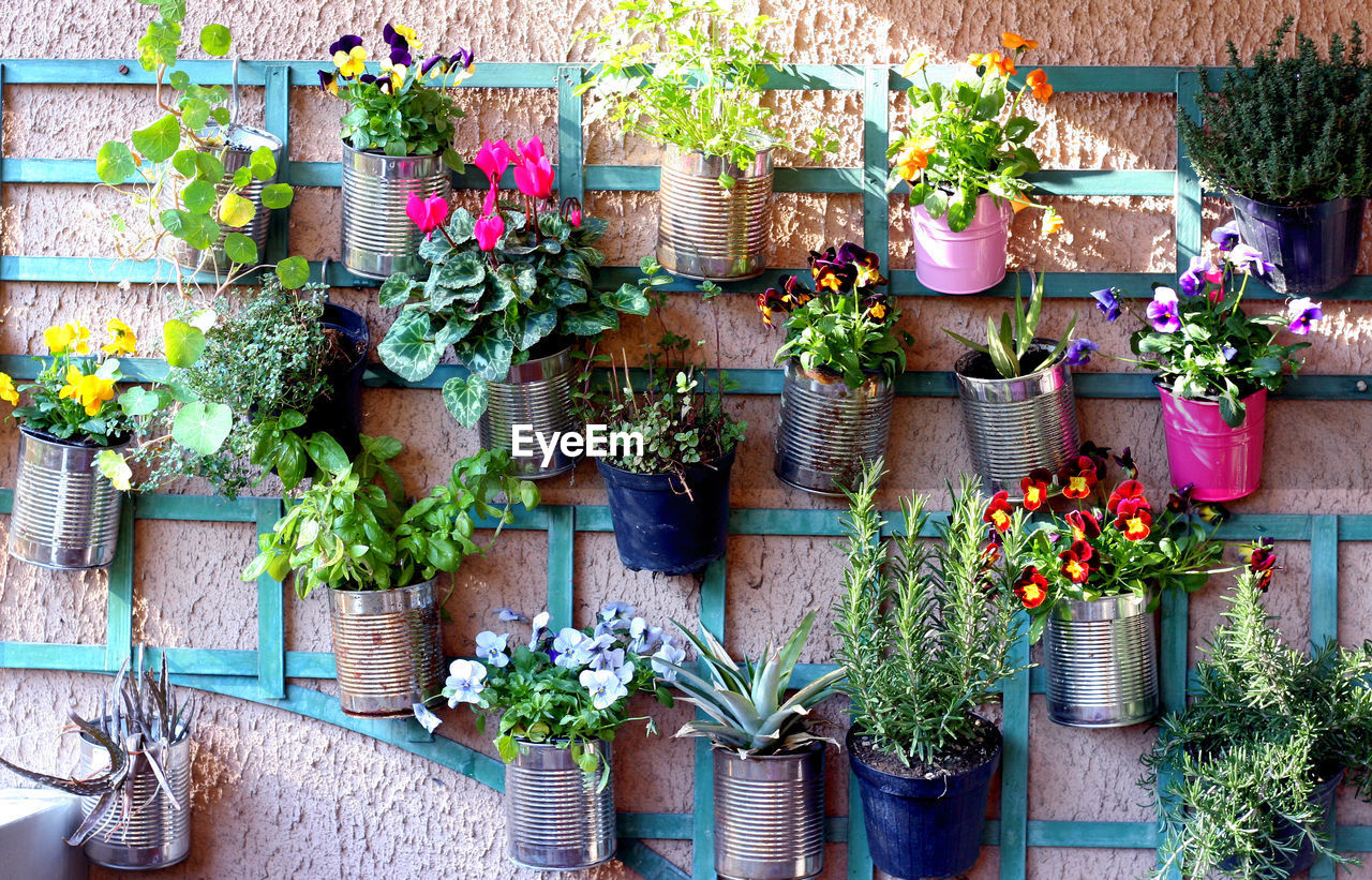 potted plant, plant, growth, outdoors, flower, day, no people, nature, architecture, building exterior, window box, freshness