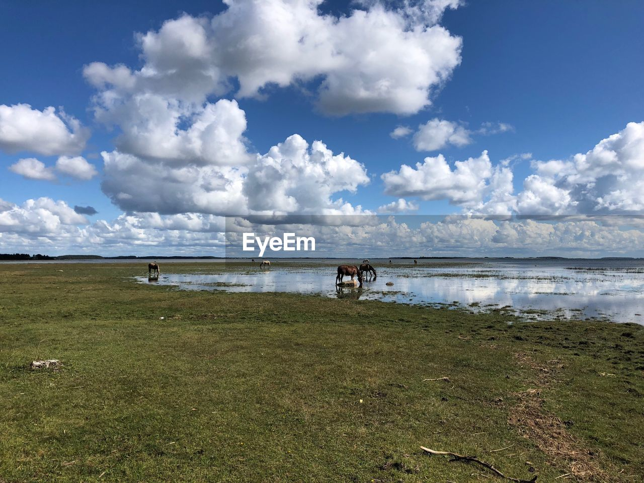 water, sky, cloud - sky, land, grass, beauty in nature, scenics - nature, nature, tranquil scene, tranquility, day, beach, plant, sea, horizon, non-urban scene, outdoors, environment, no people