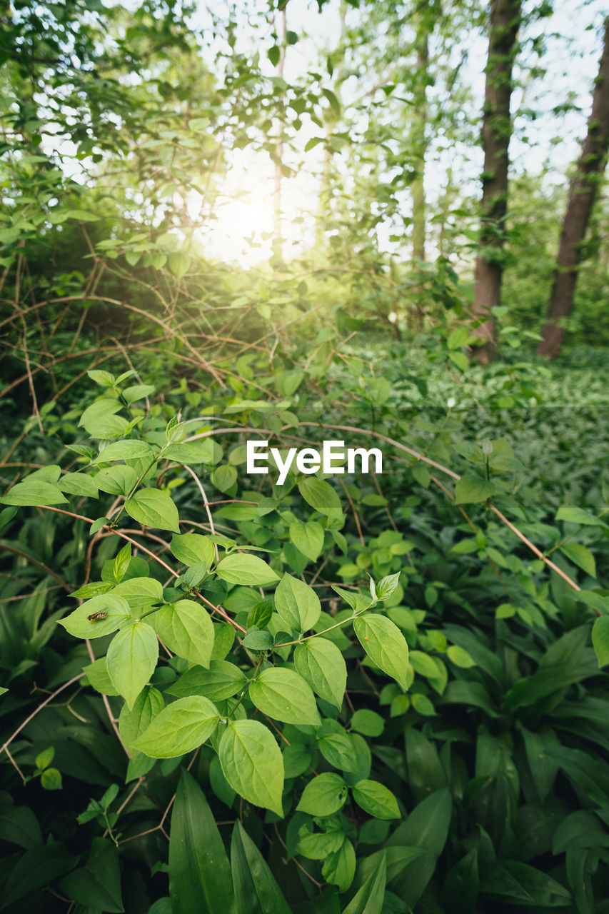 growth, plant, green color, nature, beauty in nature, land, leaf, day, plant part, tranquility, sunlight, no people, tree, forest, focus on foreground, outdoors, close-up, freshness, landscape, tranquil scene