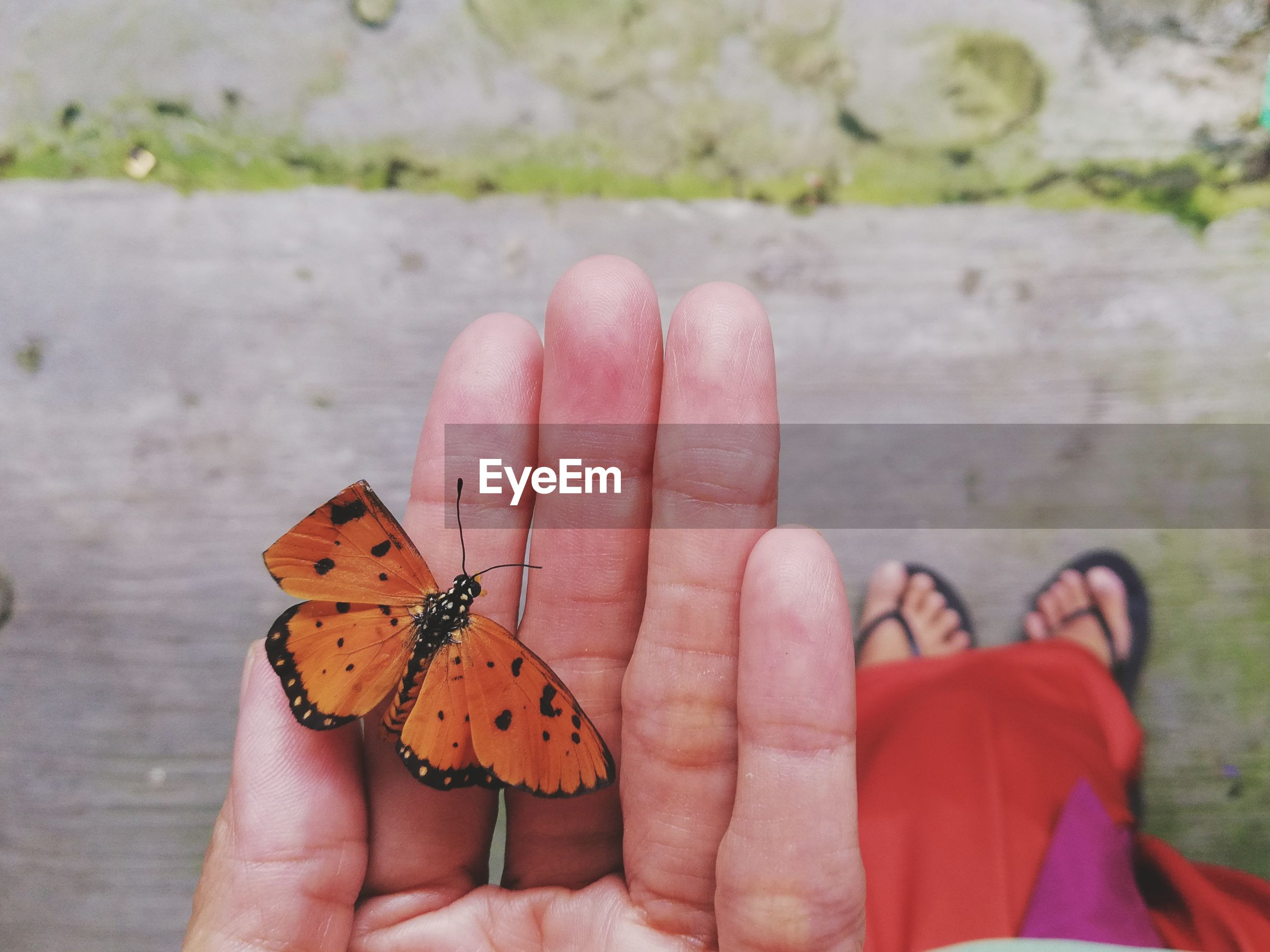 Low section of woman with butterfly on hand