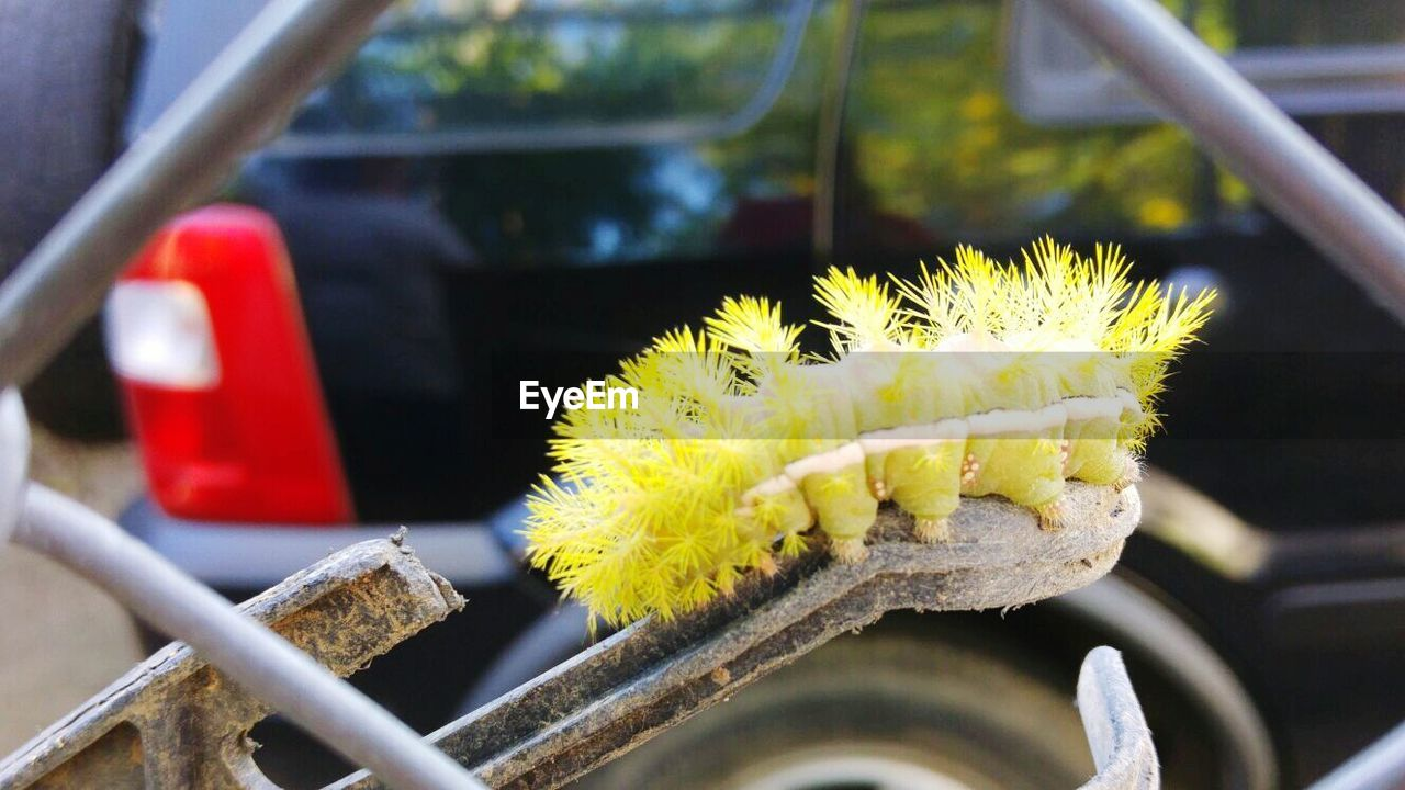 transportation, car, mode of transport, land vehicle, yellow, day, no people, outdoors, close-up, focus on foreground, flower, freshness, nature, fragility