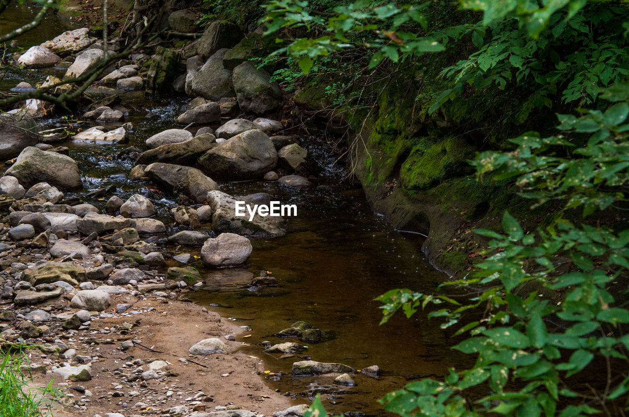 water, plant, rock, solid, nature, downloading, rock - object, no people, growth, tree, tranquility, forest, land, day, green color, beauty in nature, flowing water, stream - flowing water, outdoors, flowing, shallow, pollution