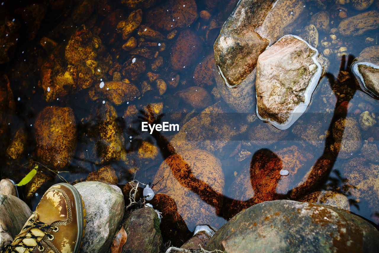 rock, solid, water, rock - object, nature, sea, no people, stone - object, transparent, underwater, day, beauty in nature, stone, animal wildlife, animals in the wild, high angle view, outdoors, wet, marine, pebble, purity, shallow