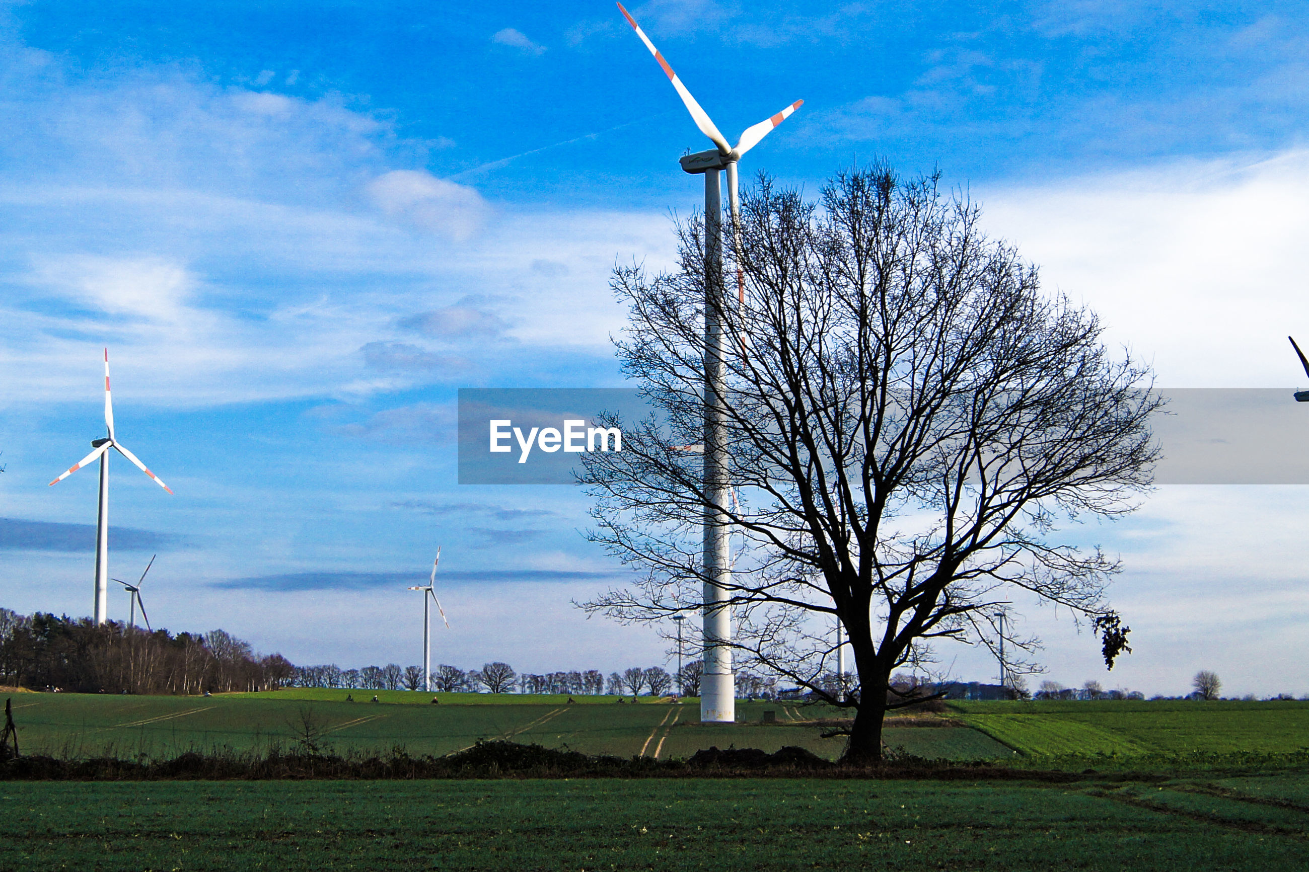 Tree and windmills on landscape against sky