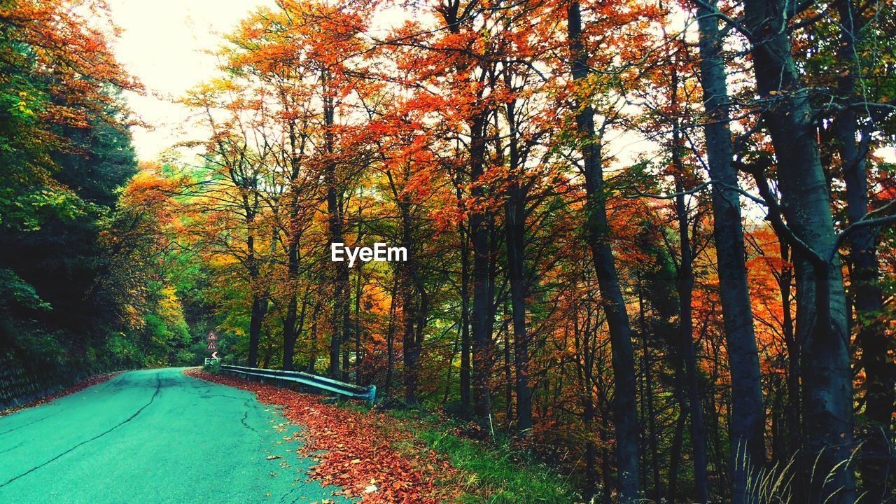 autumn, tree, change, nature, forest, beauty in nature, leaf, tranquility, tranquil scene, scenics, outdoors, day, tree trunk, growth, non-urban scene, no people, road, branch, landscape