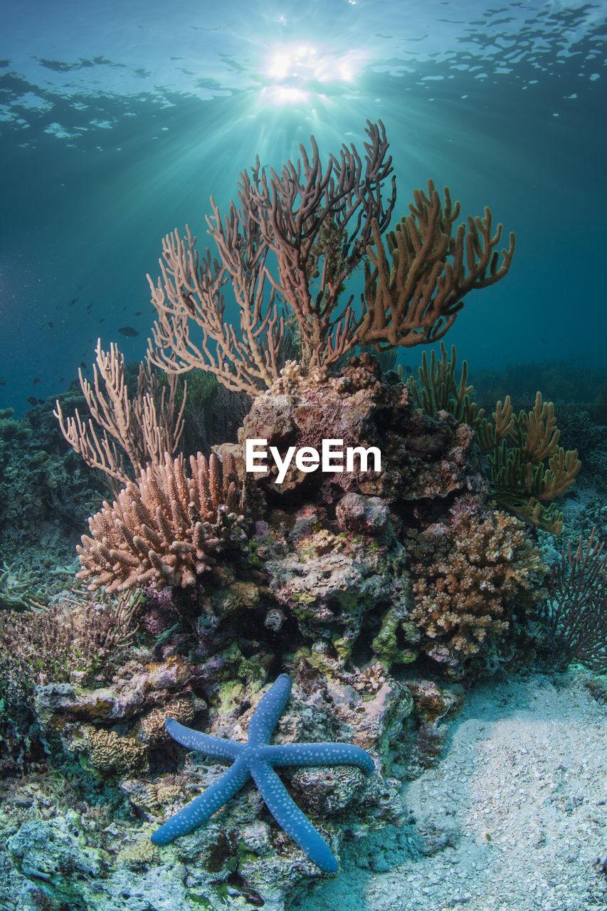 Close-Up Of Starfish On Corals Underwater