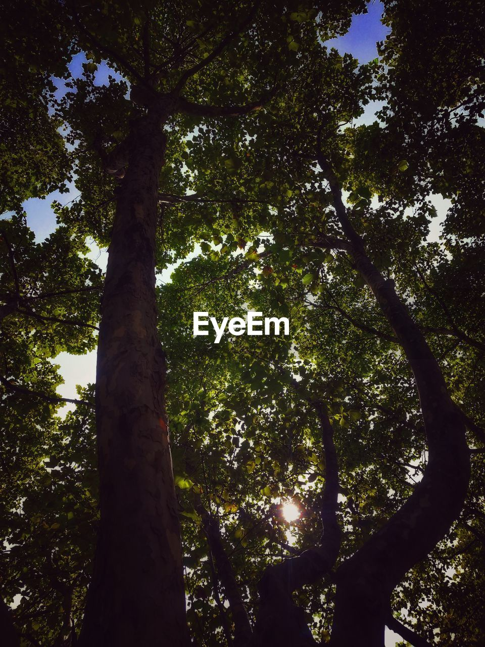 tree, tree trunk, low angle view, nature, forest, growth, tranquility, day, outdoors, no people, beauty in nature, scenics, branch, sky