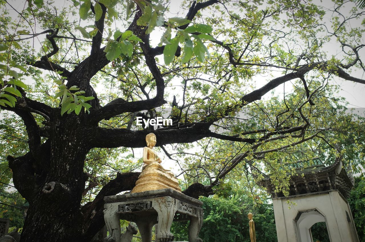 tree, religion, branch, growth, no people, architecture, low angle view, built structure, spirituality, statue, sculpture, day, place of worship, outdoors, building exterior, nature
