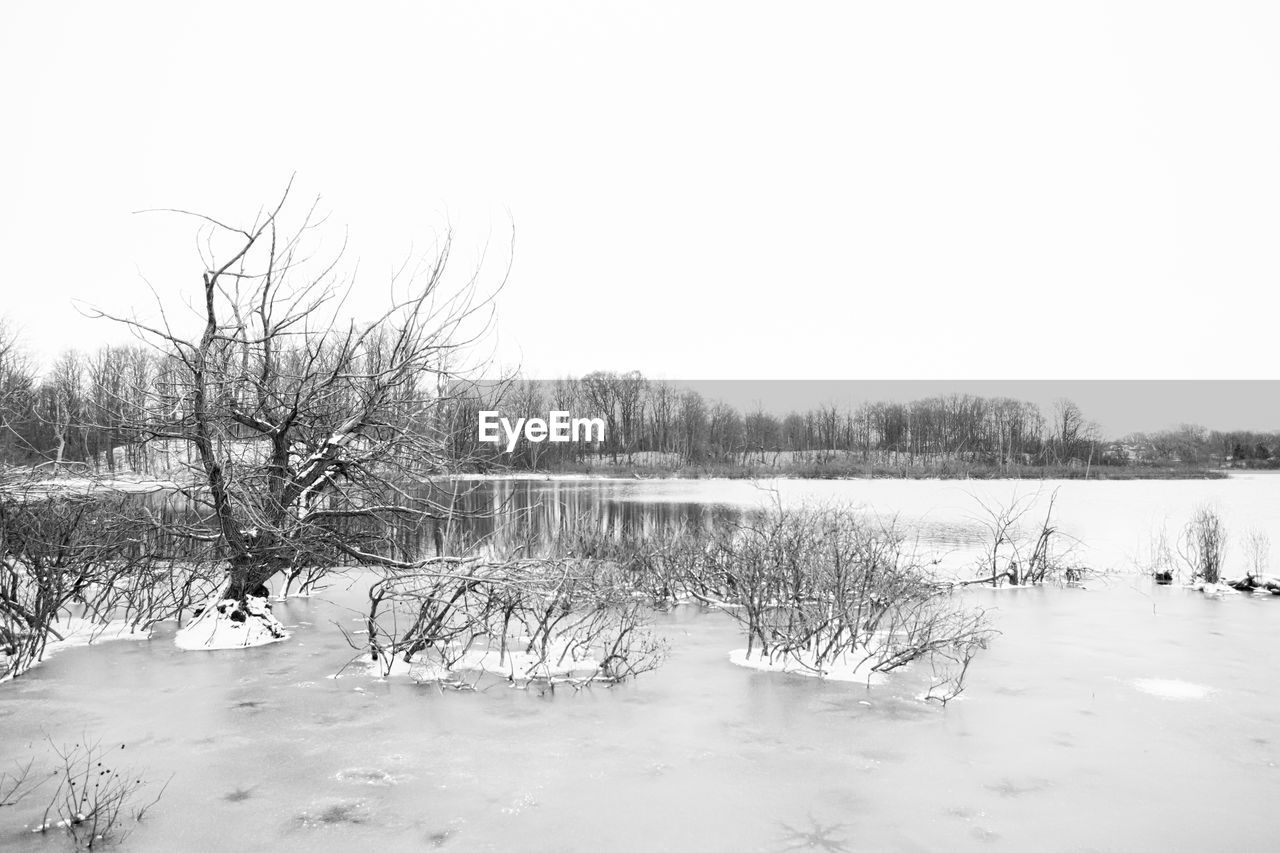 winter, snow, cold temperature, nature, frozen, cold, bare tree, tranquility, beauty in nature, ice, scenics, tranquil scene, outdoors, tree, landscape, no people, lake, water, day, clear sky, sky, bleak