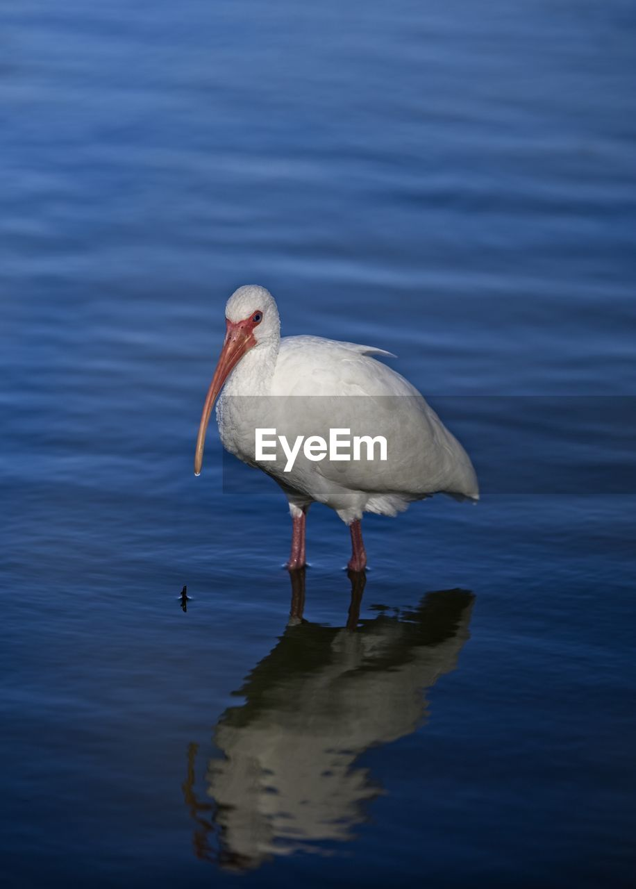 Water bird on the gulf coast