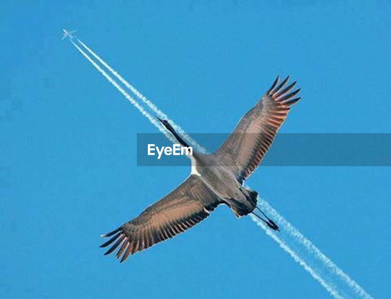 flying, blue, spread wings, animal wildlife, day, one animal, outdoors, clear sky, animals in the wild, no people, nature, sky, animal themes, bird