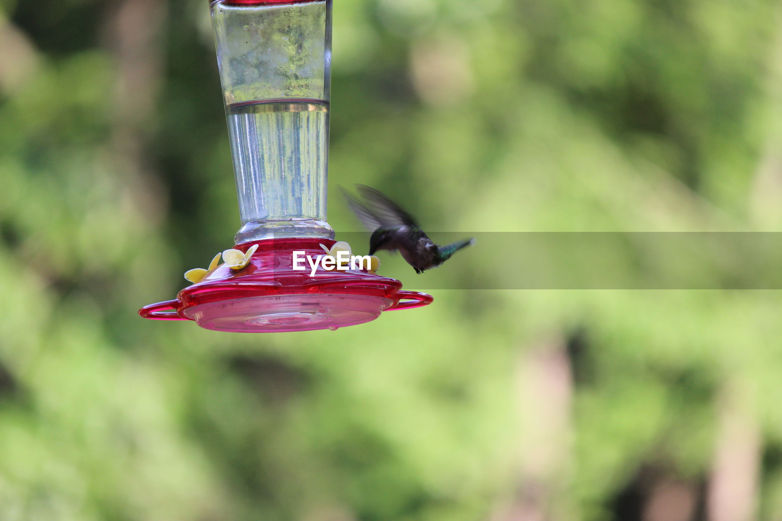 Hummingbird feeding on bird feeder