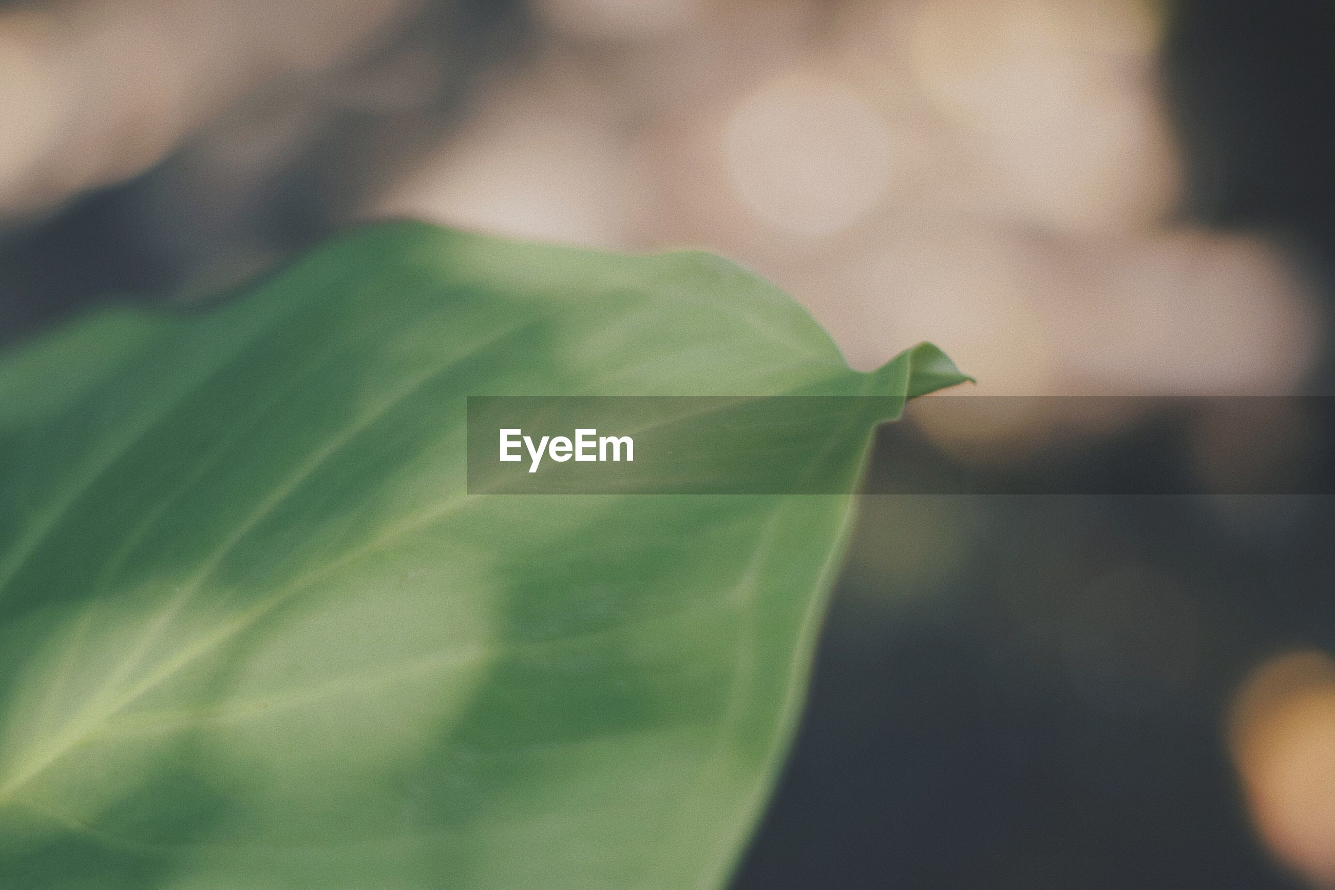 leaf, green color, close-up, plant, growth, day, focus on foreground, fragility, nature, no people, outdoors, freshness, beauty in nature