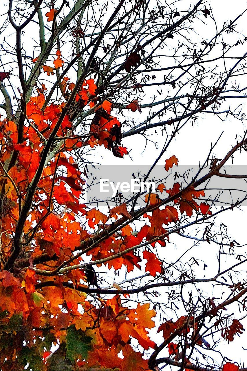 tree, low angle view, branch, beauty in nature, orange color, growth, nature, outdoors, day, no people, change, autumn, flower, sky, fragility, freshness