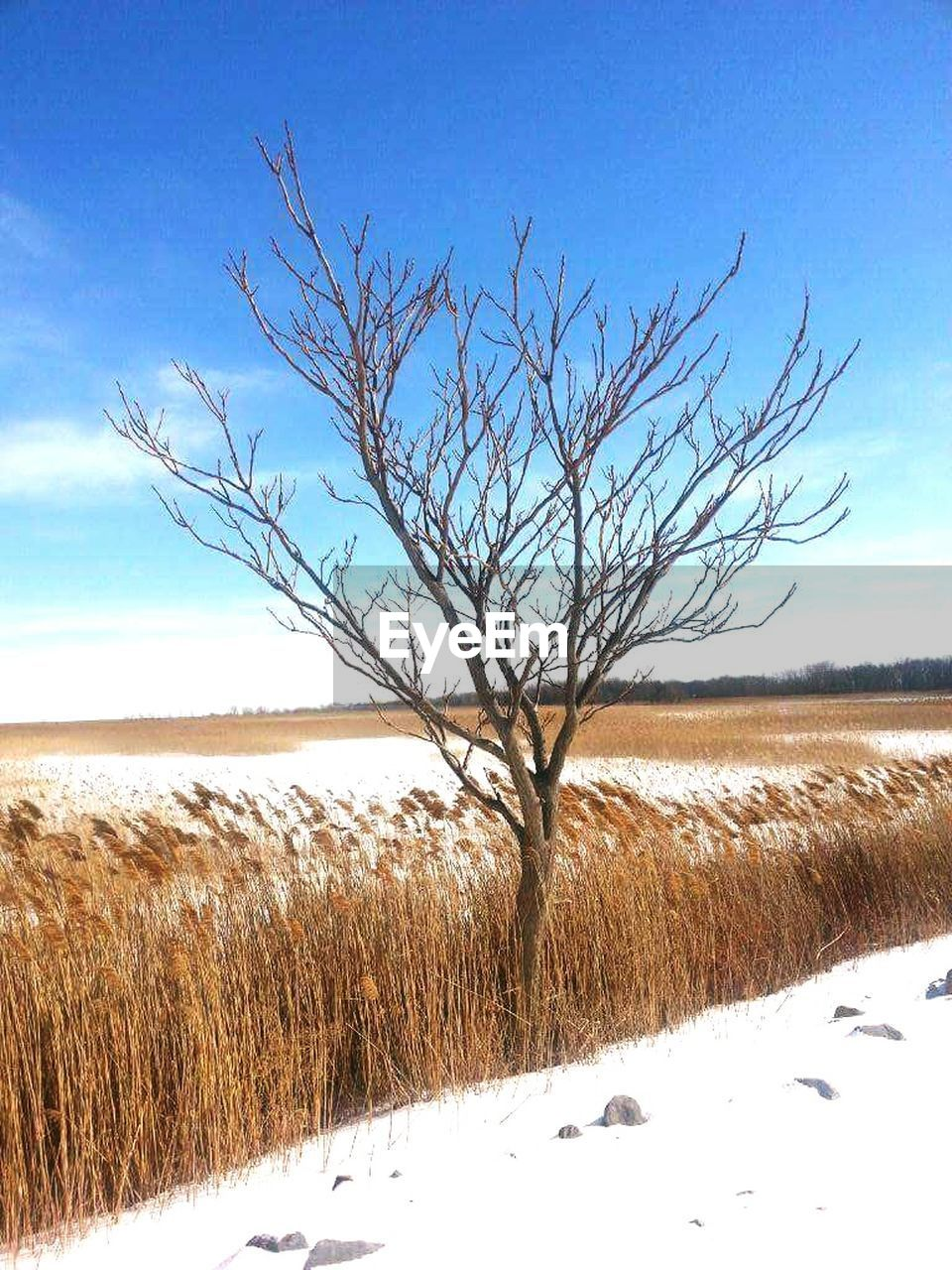 bare tree, nature, winter, cold temperature, tranquility, landscape, tranquil scene, snow, beauty in nature, scenics, field, outdoors, tree, sky, day, no people, grass, branch