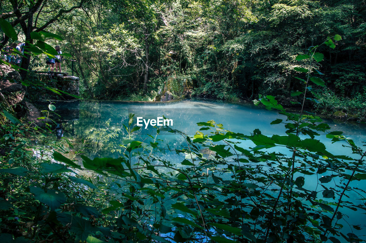 water, tree, plant, beauty in nature, nature, forest, scenics - nature, river, day, growth, tranquility, no people, tranquil scene, motion, land, flowing water, green color, non-urban scene, outdoors, flowing, rainforest