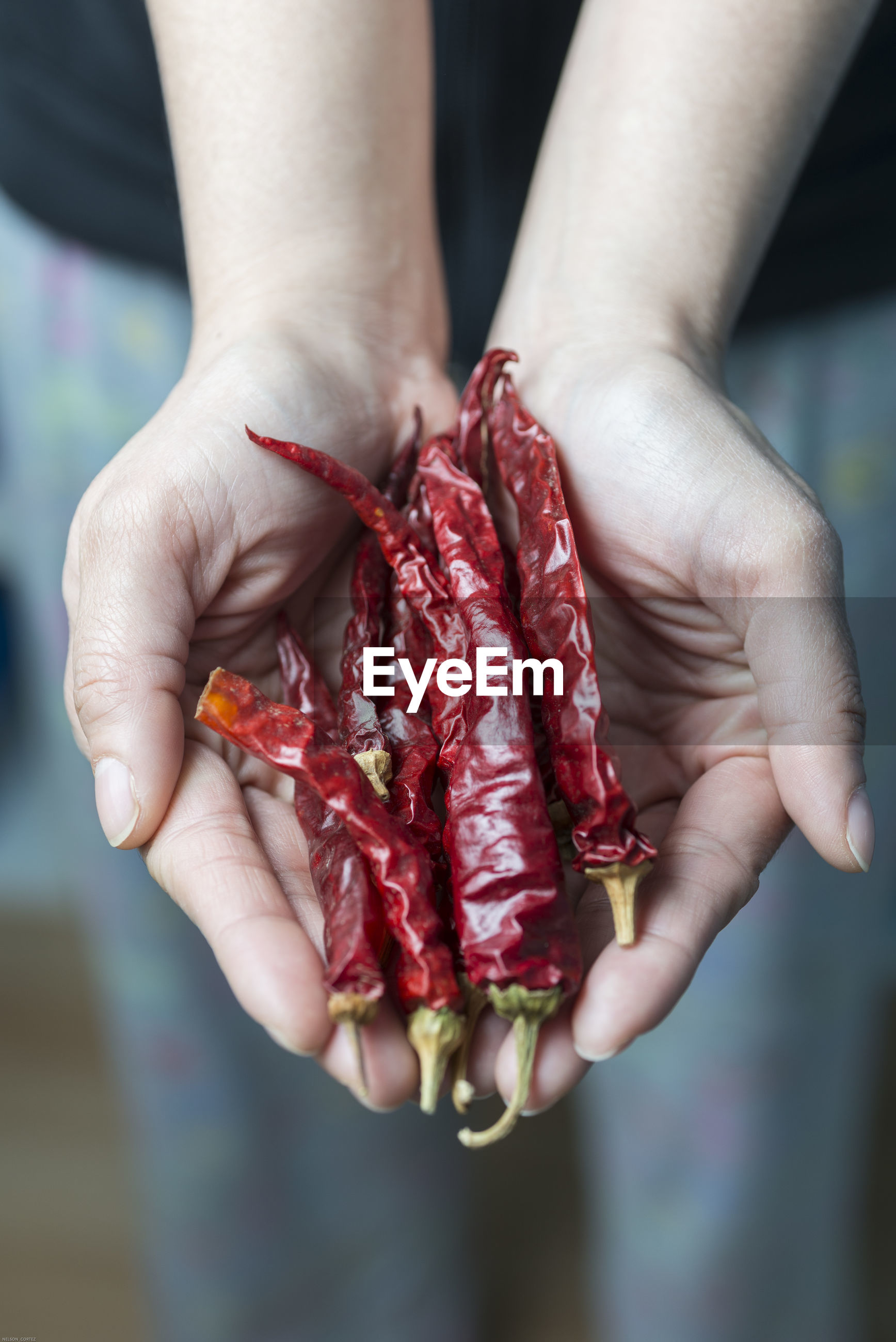 Midsection of woman holding red chili peppers