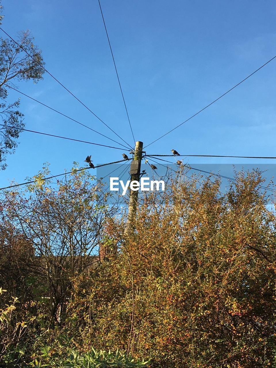 cable, connection, power line, electricity, power supply, tree, low angle view, fuel and power generation, day, technology, outdoors, no people, electricity pylon, nature, sky, telephone line