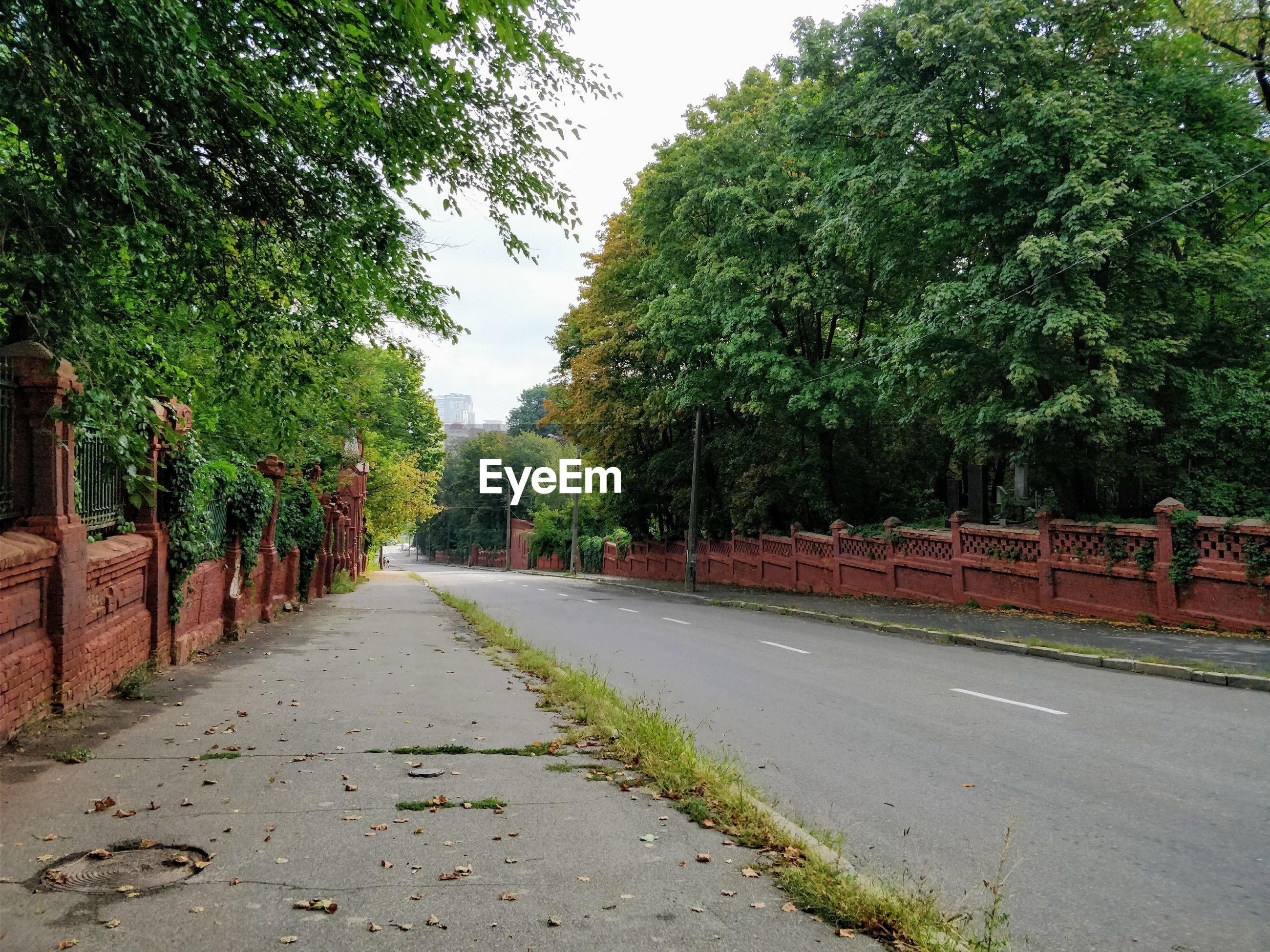 ROAD AGAINST TREES