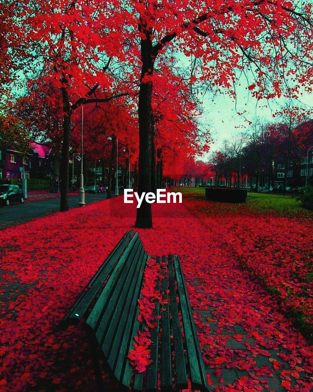 tree, autumn, beauty in nature, nature, red, change, leaf, growth, scenics, flower, outdoors, tranquility, park - man made space, no people, day, tranquil scene, fragility