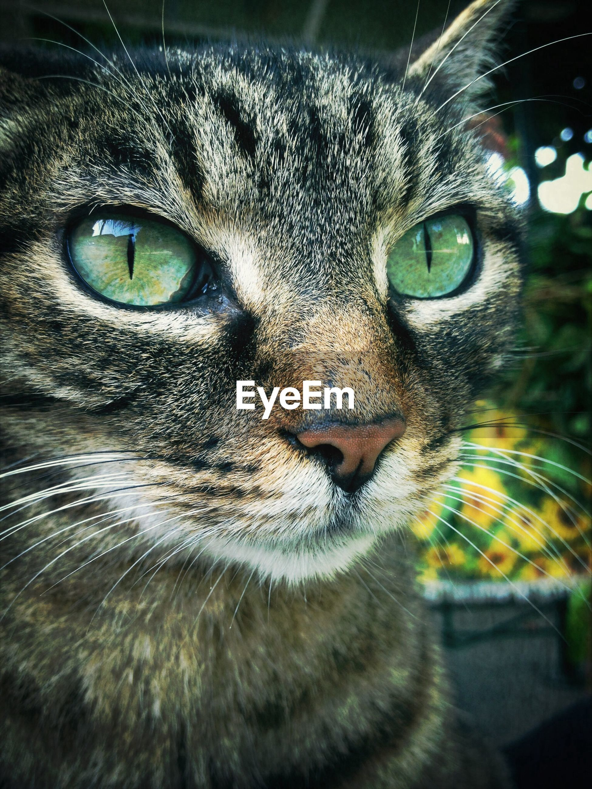 one animal, animal themes, pets, domestic animals, looking at camera, portrait, domestic cat, animal eye, cat, whisker, animal head, close-up, mammal, feline, staring, animal body part, alertness, indoors, front view, focus on foreground