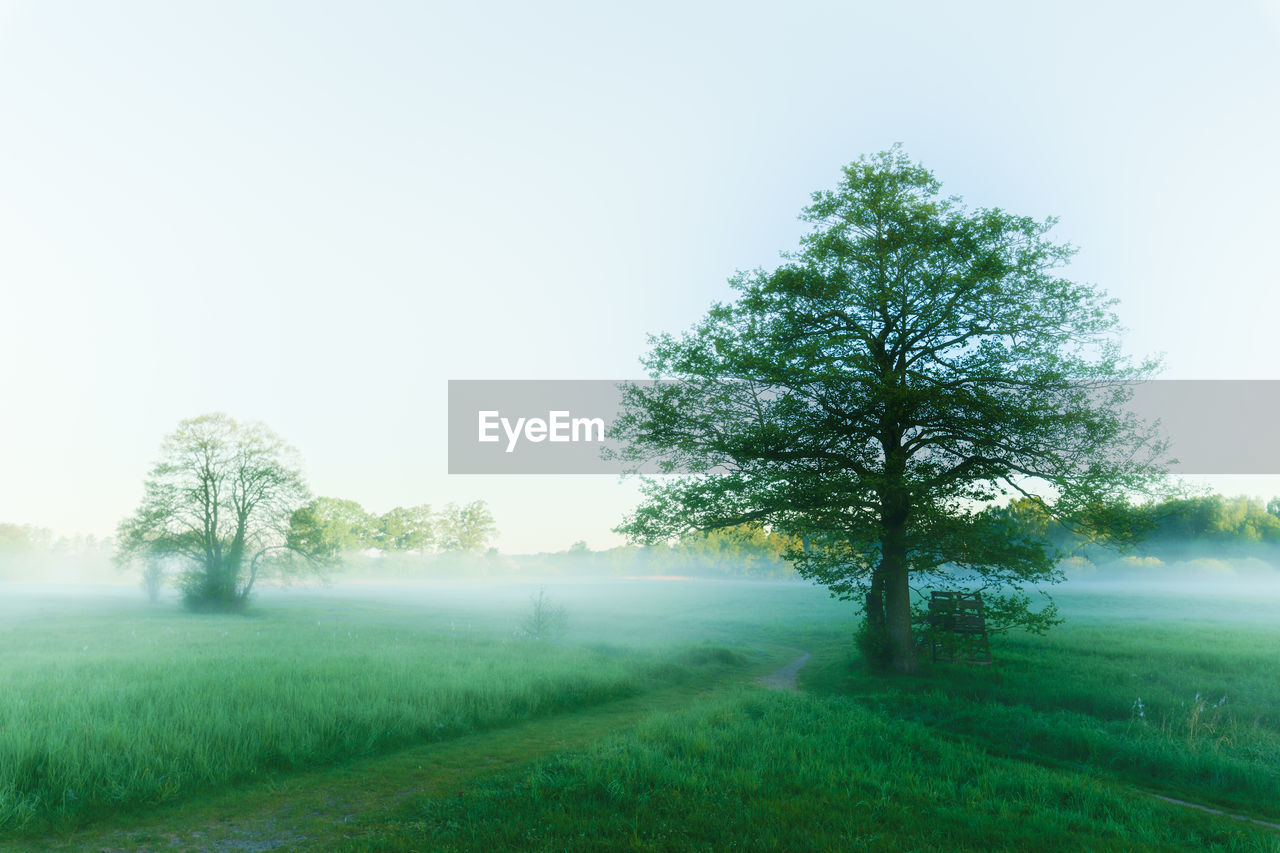 plant, tree, sky, nature, fog, landscape, field, grass, green color, tranquil scene, tranquility, beauty in nature, environment, land, no people, day, scenics - nature, growth, outdoors