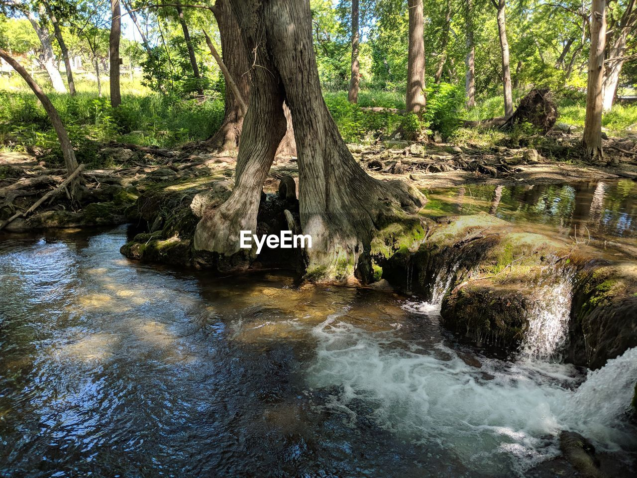 tree, forest, plant, water, land, nature, scenics - nature, beauty in nature, tree trunk, trunk, growth, tranquility, no people, environment, day, flowing, river, non-urban scene, motion, outdoors, woodland, flowing water, stream - flowing water, rainforest