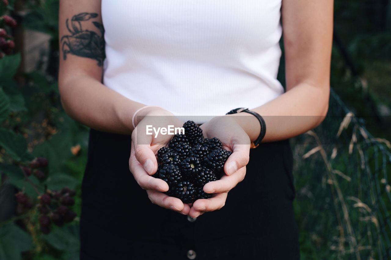 Midsection Of Woman Holding Blackberries While Standing At Farm