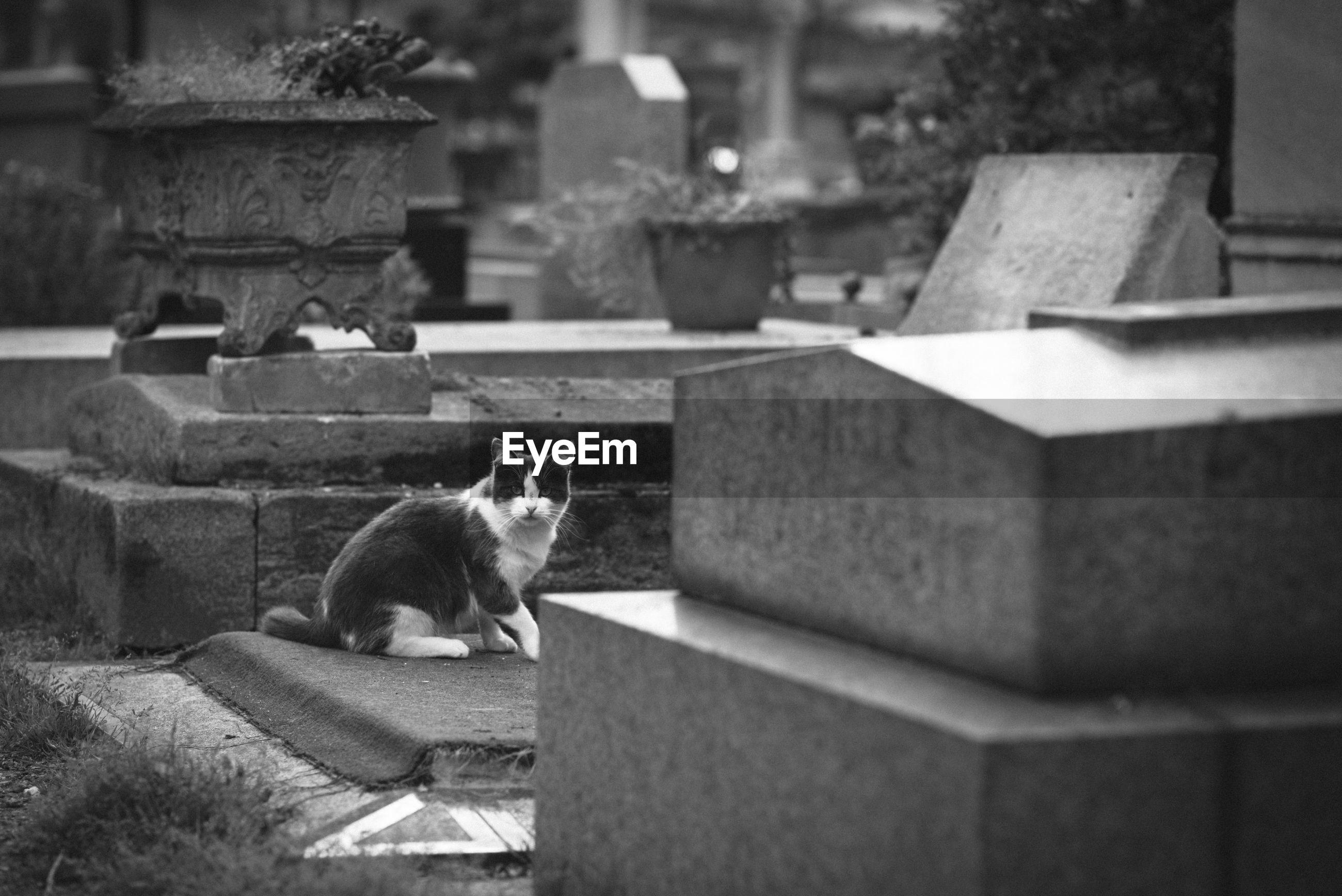 Cat sitting in a graveyard