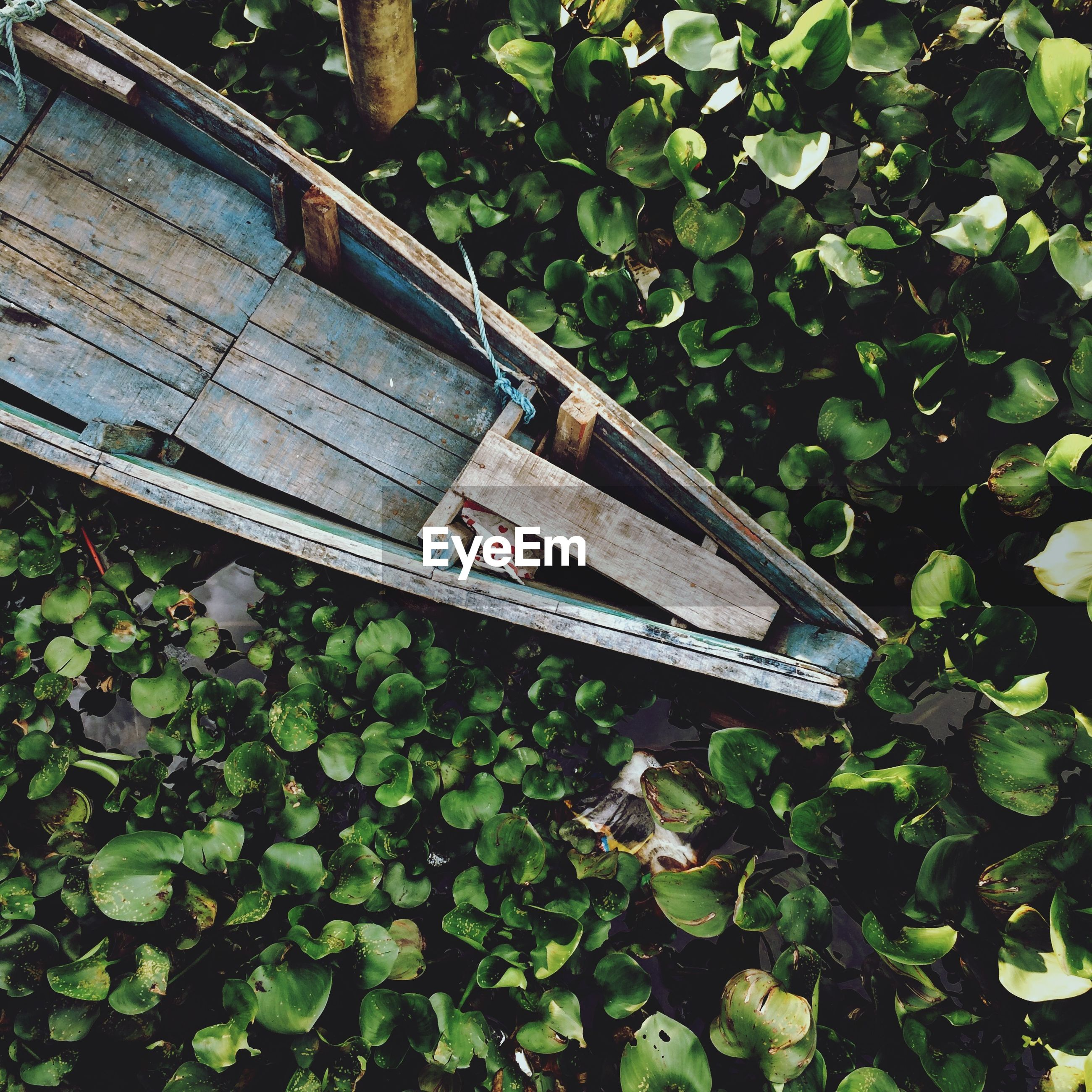 High angle view of boat amidst plants