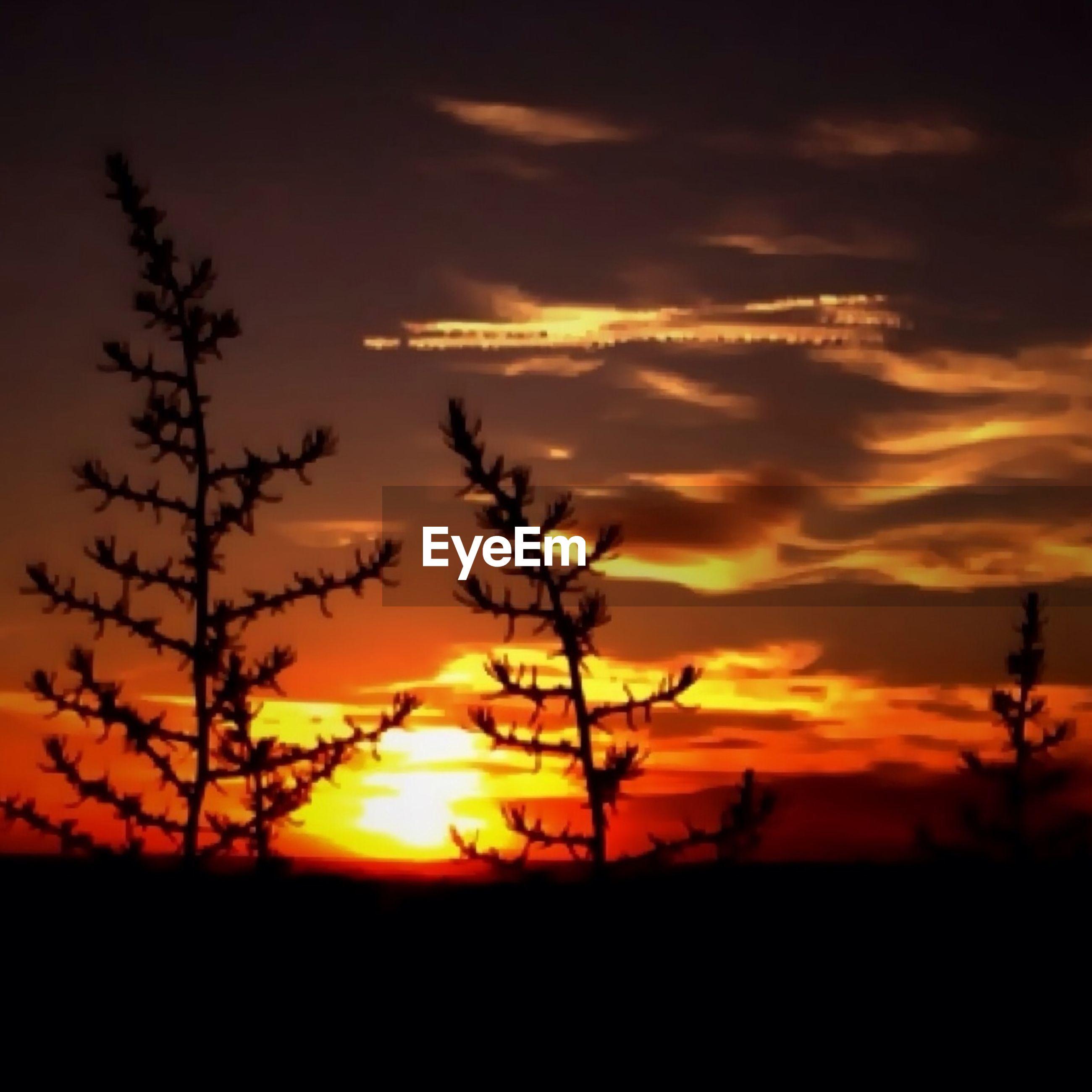 sunset, silhouette, orange color, sky, beauty in nature, scenics, tranquil scene, sun, tranquility, nature, idyllic, landscape, cloud - sky, dramatic sky, cloud, plant, field, growth, majestic, tree