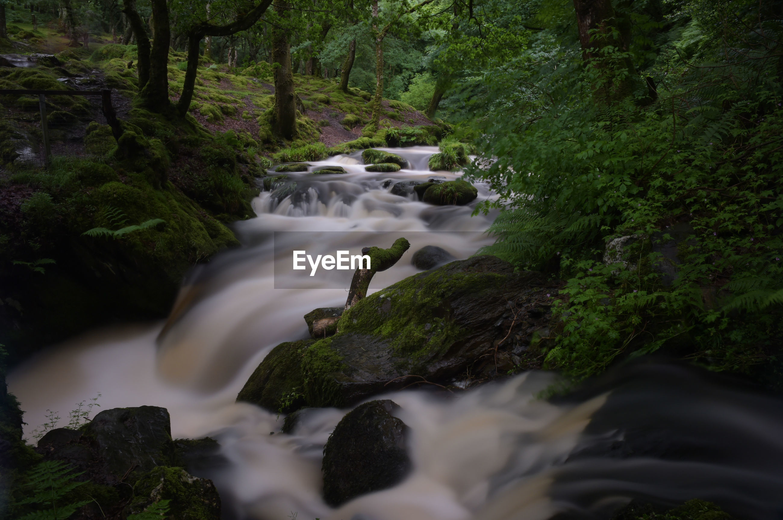WATER FLOWING THROUGH FOREST
