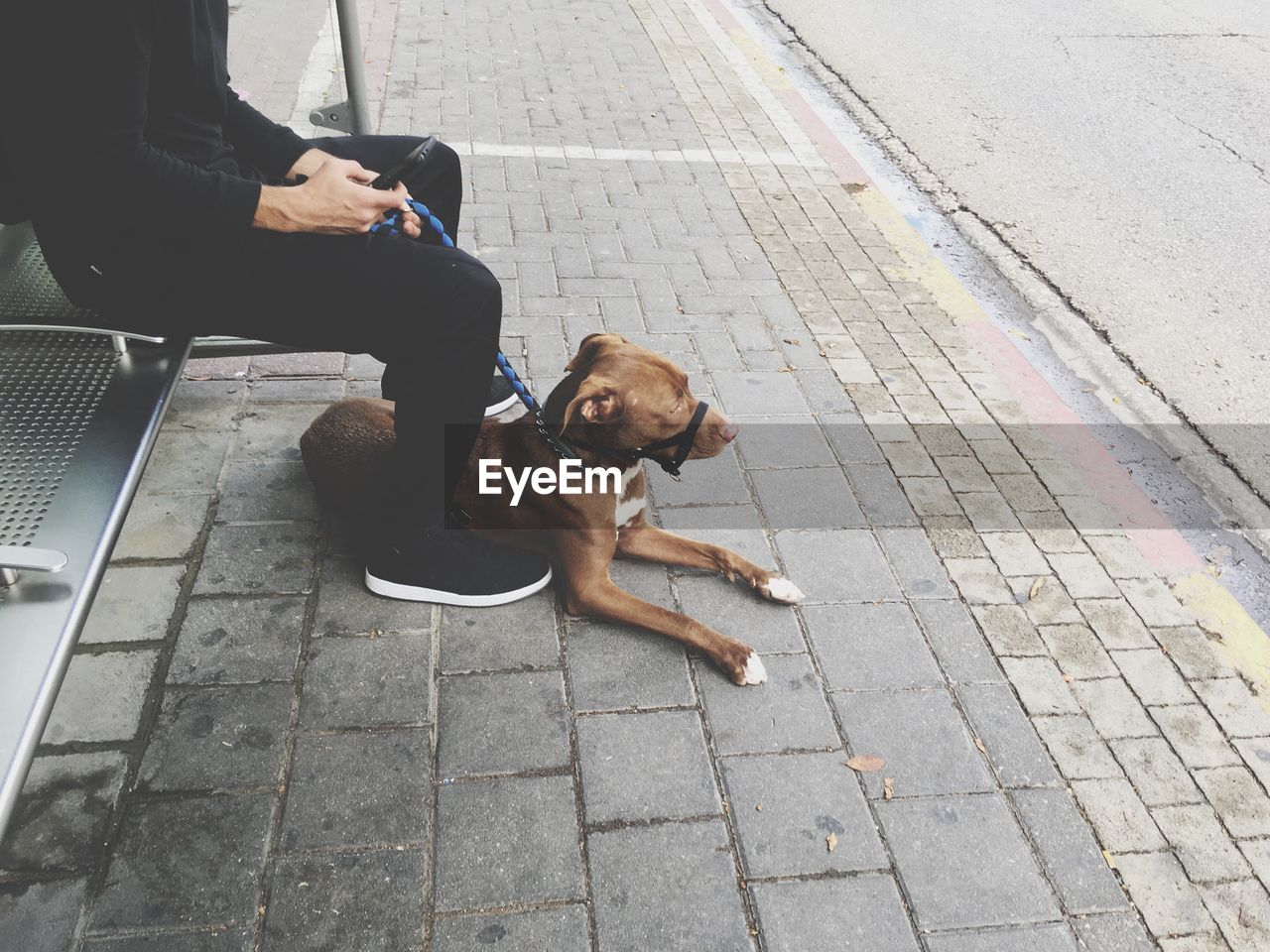 sitting, dog, real people, one animal, pets, outdoors, one person, day, technology, wireless technology, domestic animals, sidewalk, low section, communication, lifestyles, mammal, men, people