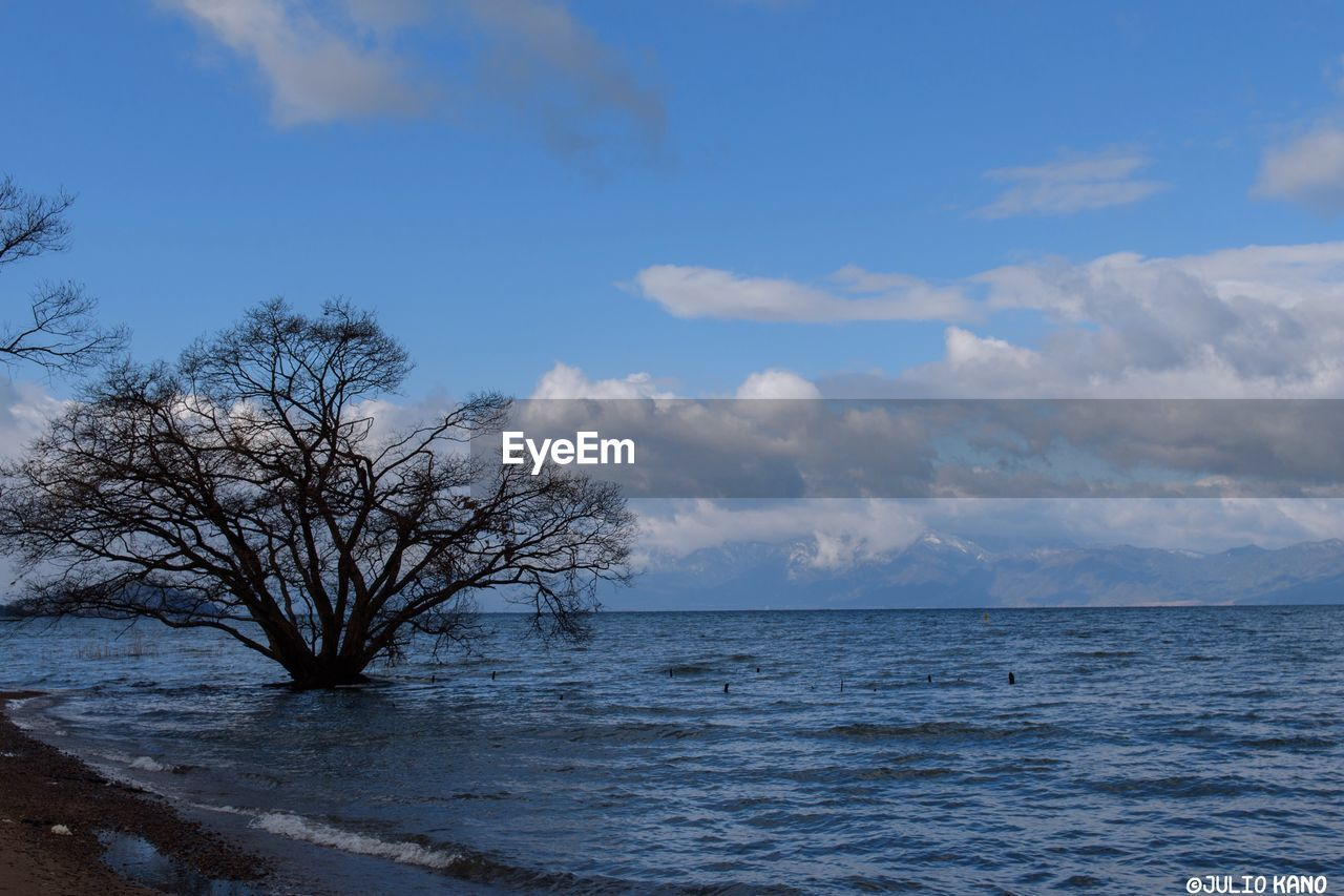 beauty in nature, nature, sky, tranquility, bare tree, scenics, tranquil scene, blue, tree, outdoors, no people, water, winter, branch, day, sea, cold temperature, lone, snow, horizon over water