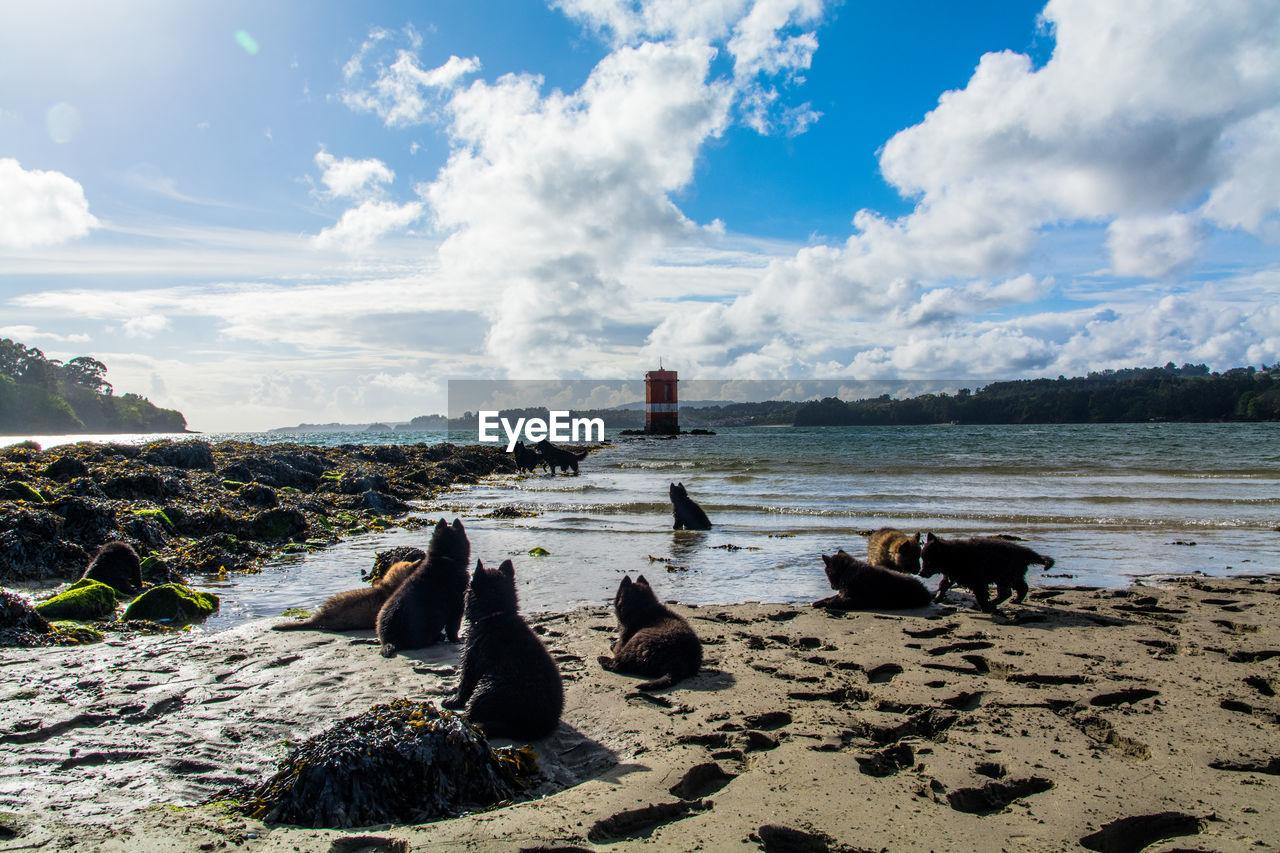 Puppies on beach against sky