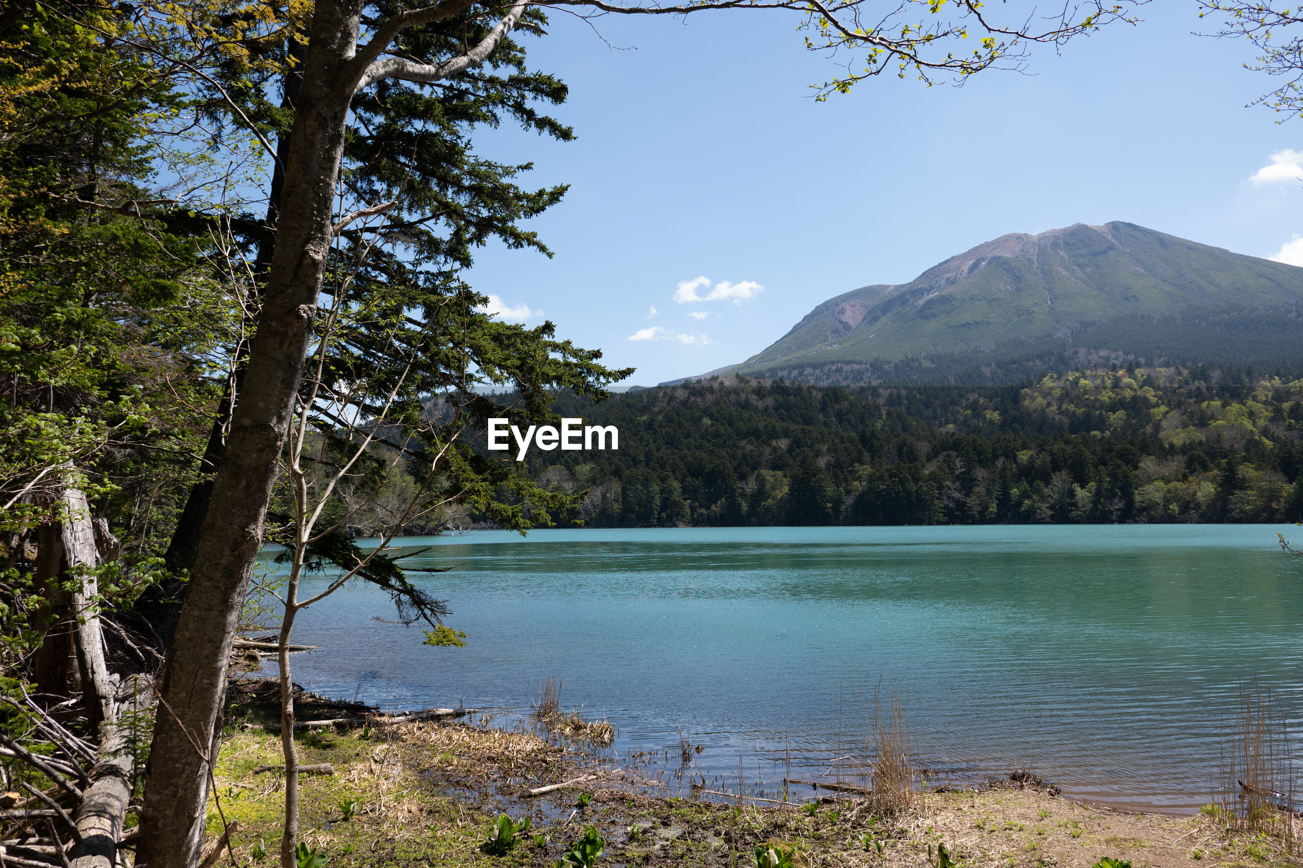SCENIC VIEW OF LAKE AND TREES AGAINST SKY