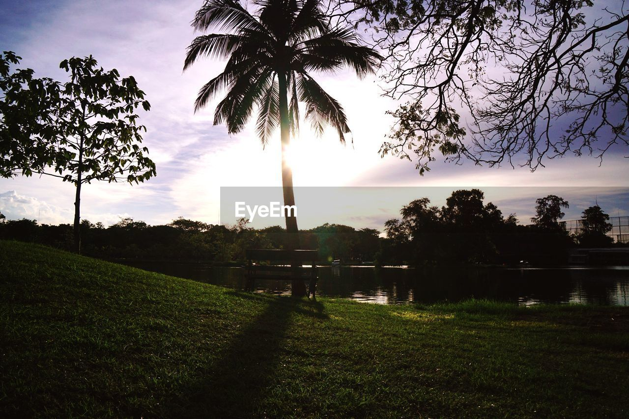 tree, grass, palm tree, growth, nature, sky, cloud - sky, sunset, beauty in nature, scenics, park - man made space, no people, field, outdoors, tranquility, tranquil scene, green color, built structure, water, tree trunk, landscape, architecture, day