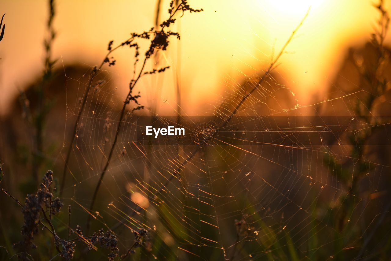 spider web, fragility, vulnerability, focus on foreground, close-up, beauty in nature, nature, no people, plant, complexity, selective focus, drop, spider, day, water, sunset, intricacy, outdoors, sky, web, dew