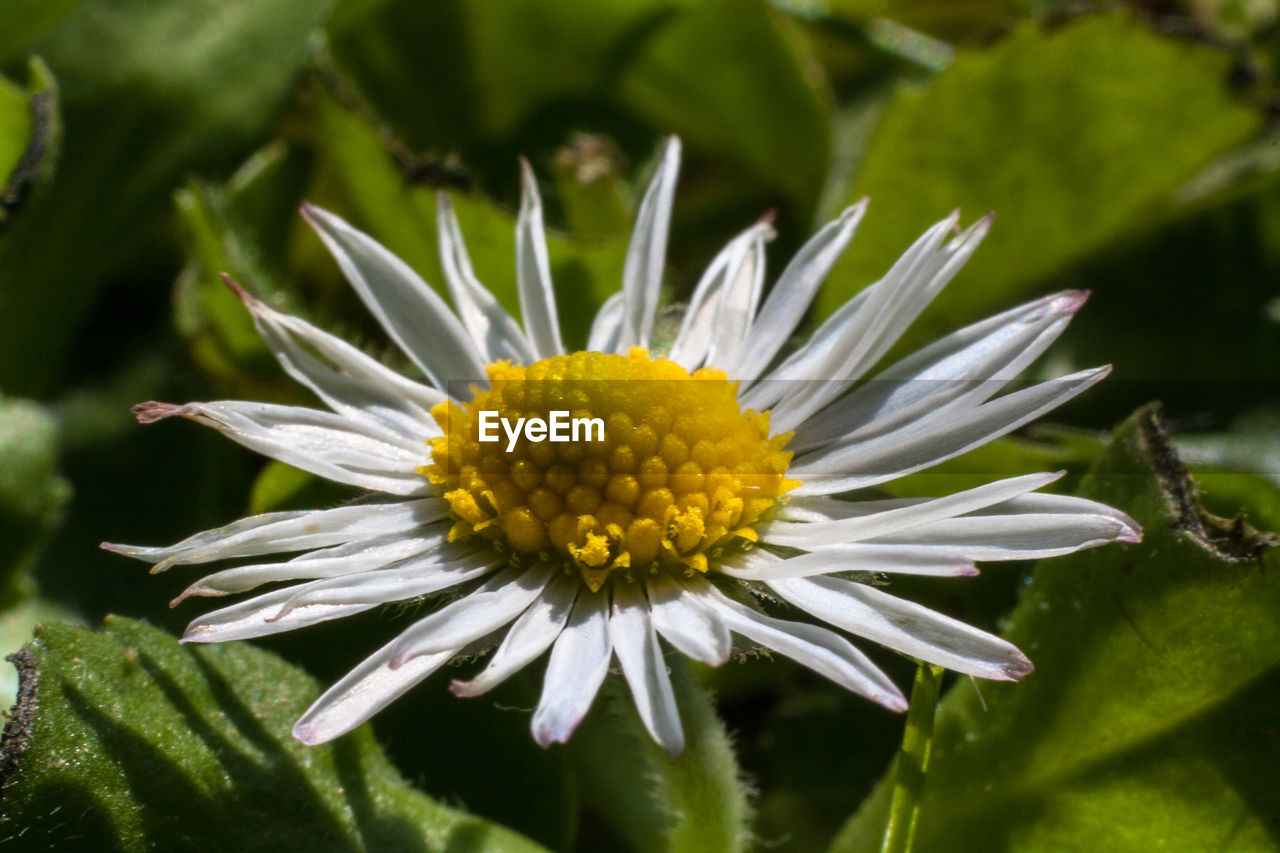 flower, beauty in nature, petal, fragility, nature, growth, freshness, flower head, plant, close-up, no people, green color, day, pollen, blooming, outdoors, yellow, leaf