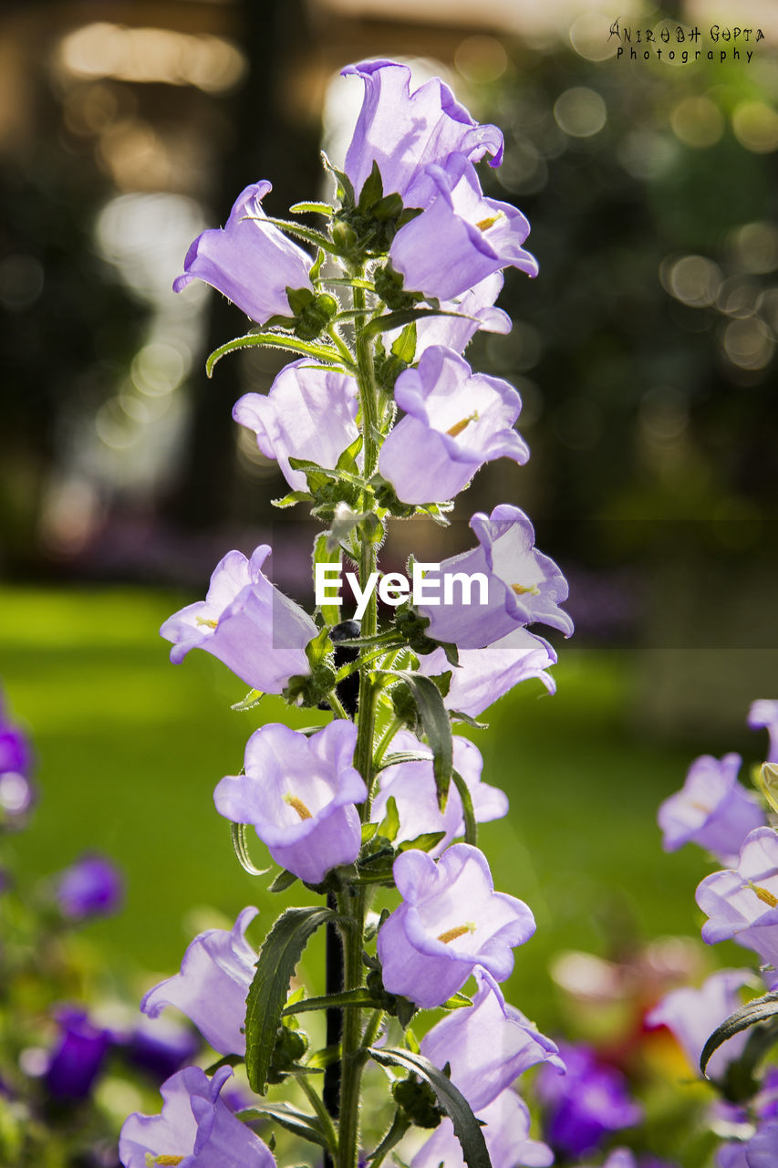 flower, nature, beauty in nature, purple, fragility, growth, focus on foreground, petal, freshness, no people, plant, day, close-up, outdoors, blooming, flower head