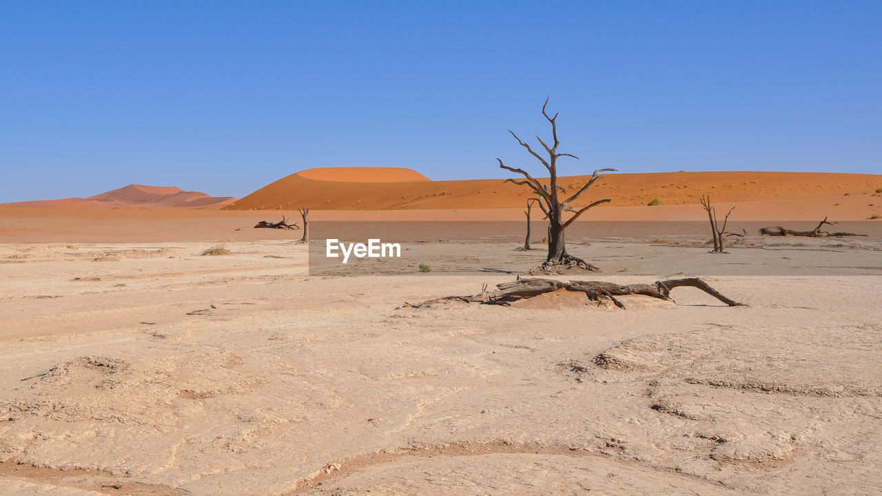 arid climate, sand dune, landscape, nature, sand, desert, clear sky, tranquil scene, day, extreme terrain, remote, blue, tranquility, outdoors, scenics, physical geography, tree, beauty in nature, no people, sky